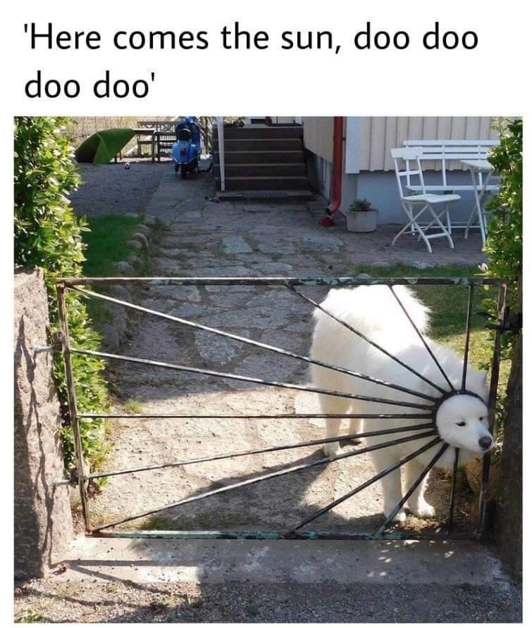개랑 냥이